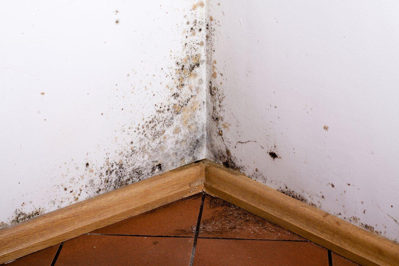 Feuchte Wande Wir Helfen Bei Ursachensuche Und Sanierung
